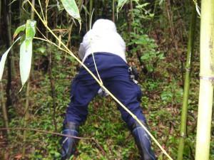 探し始めること30分。良さそうな竹が見つかった模様。現場の仕事だけが監督の仕事ではないと感じさせられたお尻です。